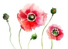 Stylized Poppy flowers illustration Stock Images
