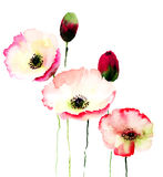 Stylized Poppy flowers illustration. Watercolor illustration Stock Images