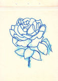 Stylized rose on cardboard. Freehand drawing. Blue watercolor sketch. Line art. Royalty Free Stock Photography