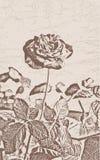 Stylized rose flower Royalty Free Stock Images