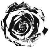Stylized rose Royalty Free Stock Image