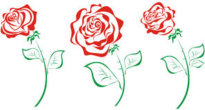 Stylized roses. Vector illustration  Royalty Free Stock Photography