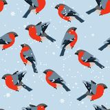 Stylized seamless pattern with bullfinches Stock Photos