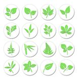 Green Leafs Plant Symbols, Stylised Selection of Vibrant Leaf Ic Royalty Free Stock Image