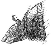 Stylized sketch of an armadillo isolated Stock Images