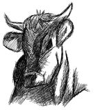Stylized sketch of a Cow  Stock Photo