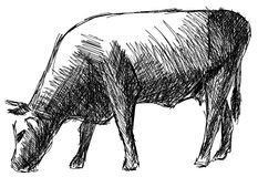 Stylized sketch of a Cow isolated Stock Photo