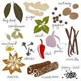 Stylized spices Royalty Free Stock Image