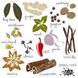 Stylized spices stock illustration