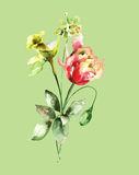 Stylized spring flowers Royalty Free Stock Photo