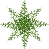 Stylized star. Or flower with green spruce branches. Vector design element Royalty Free Stock Image