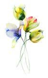 Stylized summer flowers Stock Photo