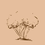 Stylized tree. Hand drawn. Brown tree sketch silhouette isolated Stock Photography