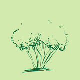 Stylized tree. Hand drawn tree sketch silhouette isolated on green background. Stock Photography