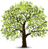Stylized tree for you design Stock Images