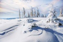 stylized treevinter för illustration snow Bokeh ljus effekt, mjukt filter Instagram toningeffekt Arkivfoton