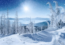 stylized treevinter för illustration snow Carpathian Ukraina Europa Arkivfoton