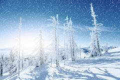 stylized treevinter för illustration snow Carpathian Ukraina, Europa Bokeh ljust ef Arkivfoto