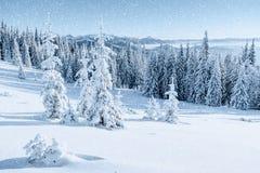 stylized treevinter för illustration snow Carpathian Ukraina, Europa Bokeh ljust ef Fotografering för Bildbyråer