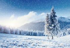 stylized treevinter för illustration snow Carpathian Ukraina, Europa Bokeh ljust ef Royaltyfri Foto