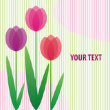 Stylized tulips. Background with stylized bright tulips with space for your text Royalty Free Stock Photography