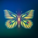 Butterfly Gonepteryx rhamni from glass shards in neon light Stock Photos