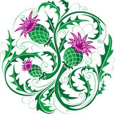Stylized vector image of a thistle Stock Photo