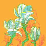 Stylized vector Magnolia. Magnolia blossom design elements. Stylized vector illustration stock illustration