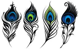 Stylized, vector peacock feathers. Set of stylized peacock feathers stock illustration
