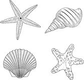 Stylized vector shell zentangle doodle Royalty Free Stock Images