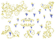 Stylized vine and clusters of grapes. Stylized vine and clusters of grapes in gold and blue colors. Collection of elements for your design Stock Photos