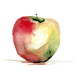 Stylized watercolor apple illustration Royalty Free Stock Images