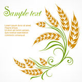 Stylized wheat pattern & text Royalty Free Stock Photos