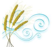 Stylized Wheat and Wind. Four hand drawn stylized wheat stalks bending in the wind royalty free illustration