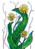 Stylized yellow wild flowers dandelion vector illustration