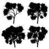 Stylizowana Drzewna sylwetka Obraz Stock