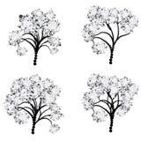 Stylizowana Drzewna sylwetka Zdjęcie Royalty Free