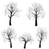 Stylizowana Drzewna sylwetka Zdjęcia Royalty Free