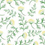 Stylizowanej akwareli bezszwowi deseniowi sprigs greenery, koper lub koper, Wektorowego kwiatu koperkowy bezszwowy tło Ziele jedz Zdjęcie Royalty Free