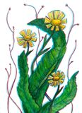Stylizowany żółty dzikich kwiatów dandelion ilustracja wektor