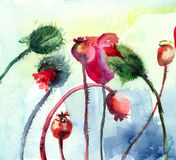 Stylizowany Maczek kwitnie ilustrację Obraz Stock