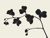stylizująca gałęziasta orchidea Obraz Stock