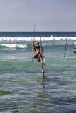 Styltafiskare Arkivfoto