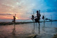 Styltafiskare i Koggala, Sri Lanka Arkivbild