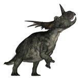 Styracosaurus dinosaur roaring - 3D render Royalty Free Stock Photography