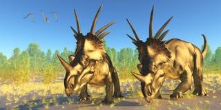 Styracosaurus Dinosaurs Stock Photography