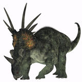 Styracosaurus on White. Styracosaurus was a herbivorous ceratopsian dinosaur from the Late Cretaceous Period Stock Photos