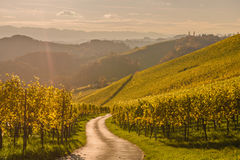 Styria. N Tuscany Vineyard at summer sunset, Austria Stock Image