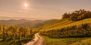 Styrian summer landscape. Styrian Tuscany Vineyard at summer sunset, Austria Stock Images