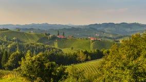 Styrian summer landscape. Styrian Tuscany Vineyard at summer sunset, Austria Stock Photos